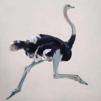 Claire Sandars, Ostrich, oil on canvas board, 90 x 90 cm