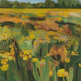 XV Golden Buttercups on Binsey Lane, oil on canvas, 51 x 51 cm